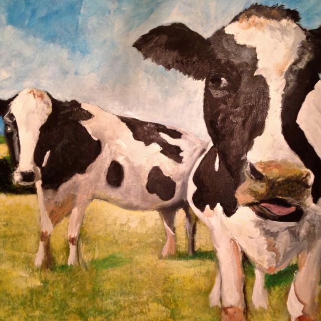Cows #1