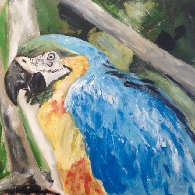 Blue & Yellow Macaw Parrot