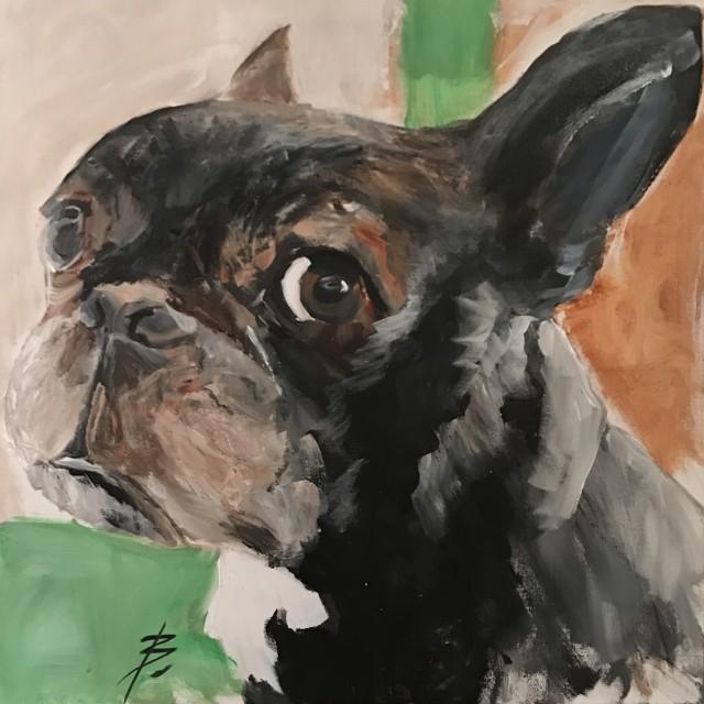 Missy - French Bulldog
