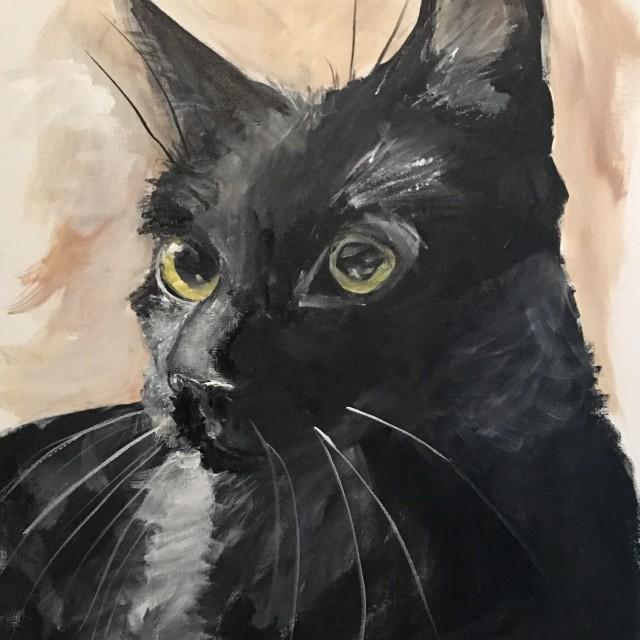 Hootie the Cat