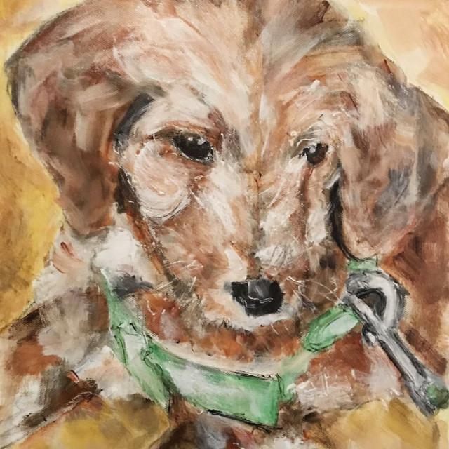 Hazel - Golden Doodle Puppy
