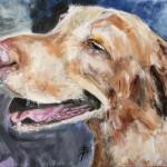 Buddy - Yellow Labrador